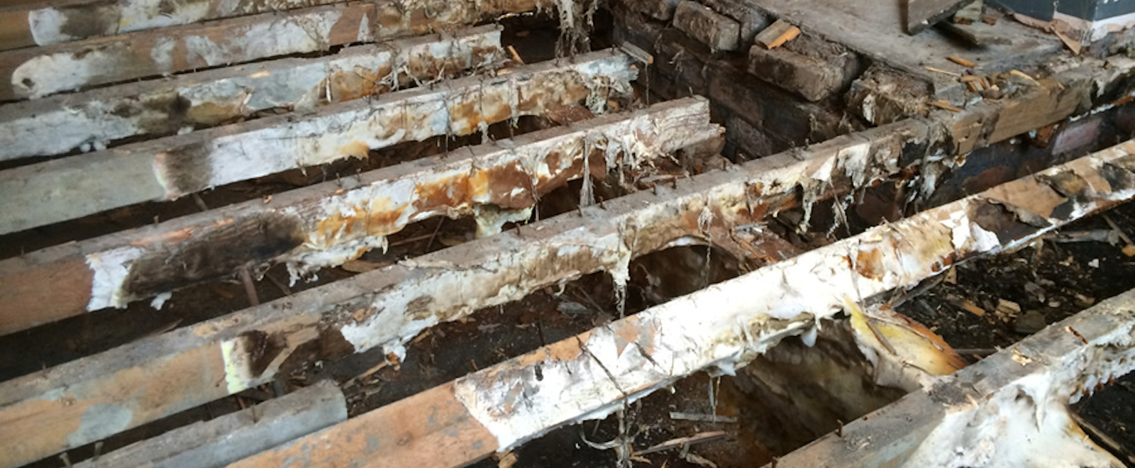 Dry & Wet Rot, Fungal Timber Decay